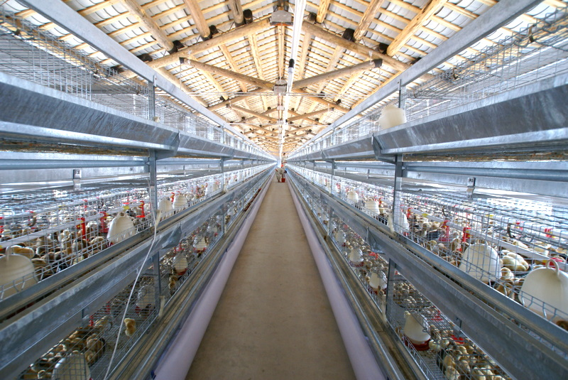 OWT7001 用于畜禽養殖廢物處理