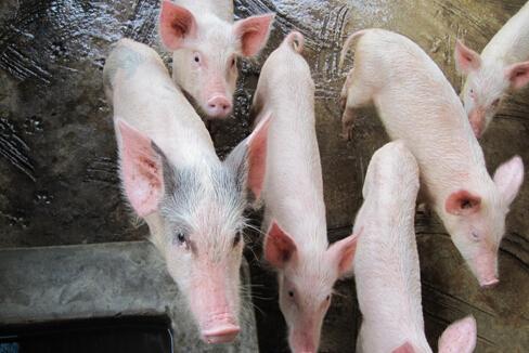 OWT8013 食品、屠宰、养殖类废水处理